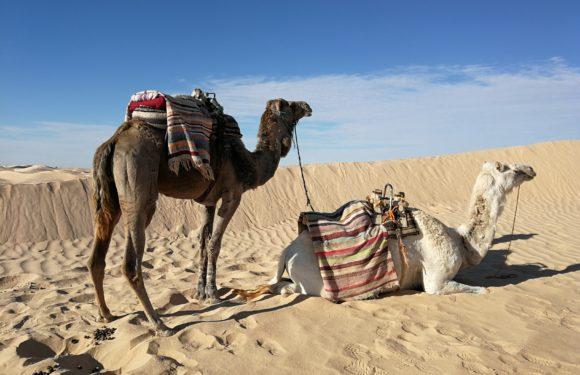 Tunisko: Zemi datlí a dlouhých písčitých pláží si zamilujete