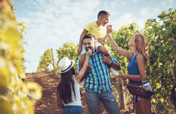 Objevte krásy Česka: Vinařské stezky a cyklostezky